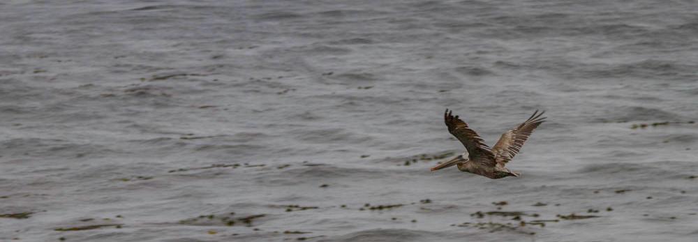 Pelican, Carmel by the Sea, California, Power Words, A Daily Affirmation, www.adailyaffirmation.com