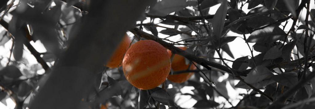 Orange Tree, Personal Inventories, A Daily Affirmation, www.adailyaffirmation.com