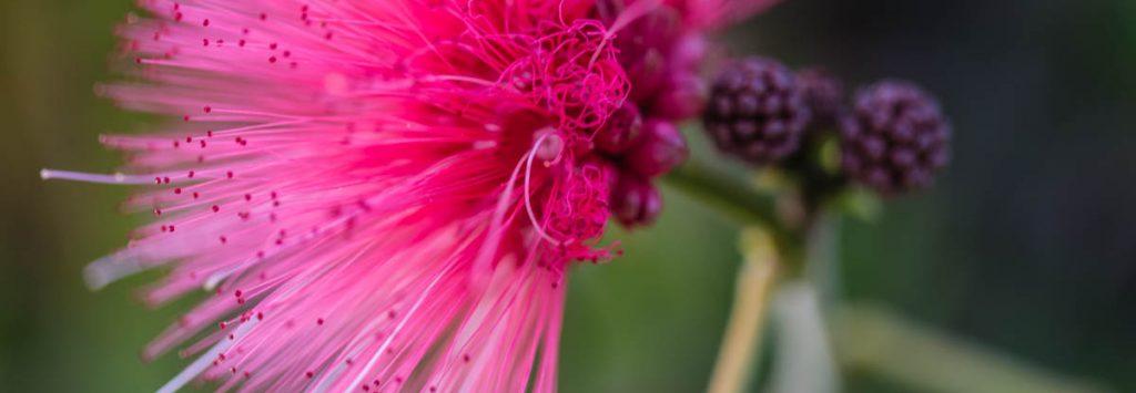 Hummingbird Flower, Prosperity, A Daily Affirmation, www.adailyaffirmation.com