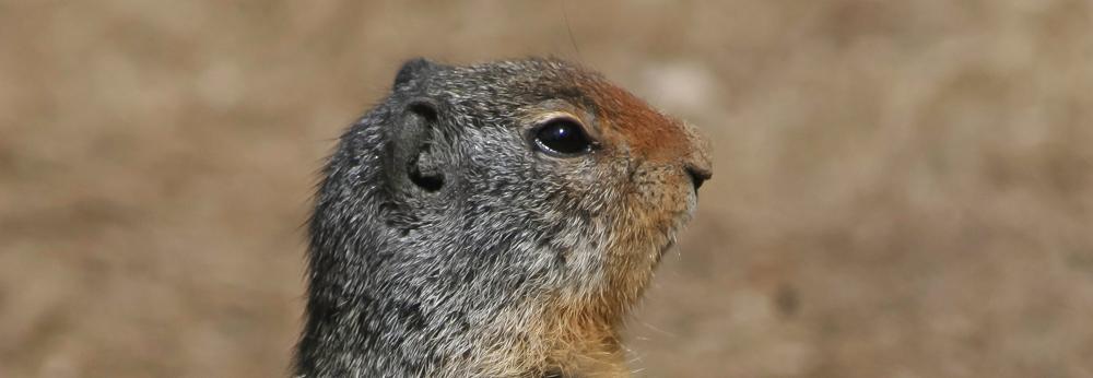 Prairie Dog, Creating Success, A Daily Affirmation, www.adailyaffirmation.com
