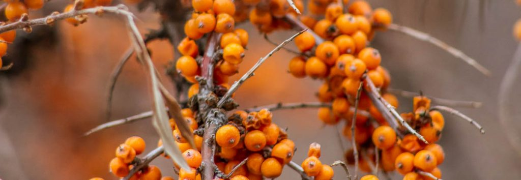 Berries, Success List, A Daily Affirmation, www.adailyaffirmation.com