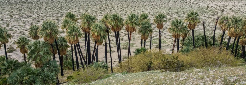 Charred Palms, A Daily Affirmation, www.adailyaffirmation.com