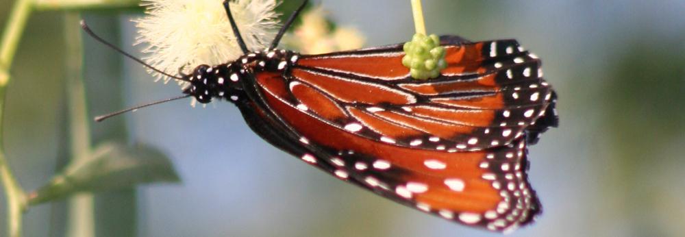 Butterfly, Transformation, A Daily Affirmation, www.adailyaffirmation.com