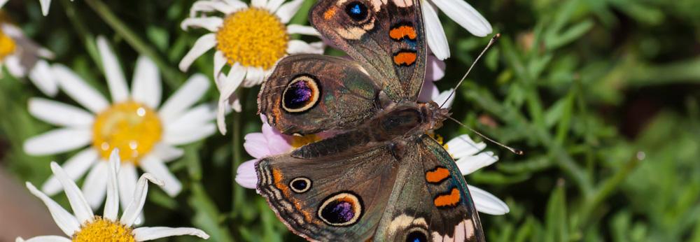 Moth, Dreams, A Daily Affirmation, www.adailyaffirmation.com