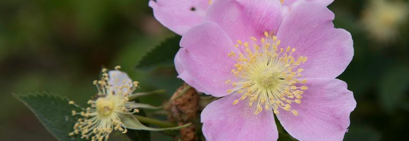 Flower, Kindness, A Daily Affirmation, www.adailyaffirmation.com